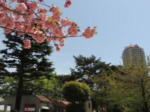 『レビュー・ステイション』2016.4.16宝塚音楽学校第104期生入学式23
