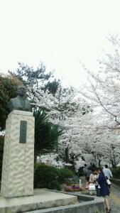 『レビュー・ステイション』2016.4.3花のみち桜1