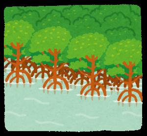 mangrove_hayashi