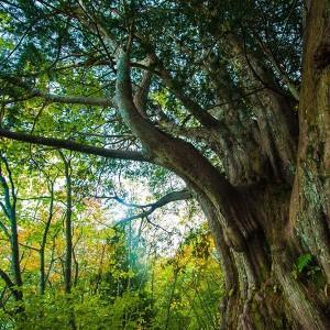 s-img_tree